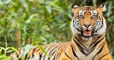 national park,india tour,incredible india,india tourism