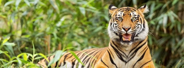 Best National Parks In India For Wildlife Enthusiasts